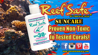 Despite Extremist Accusations About Oxybenzone, REEF SAFE™ Suncare Proven Non-Toxic to tested corals