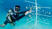 Earth Day Activities in the Cayman Islands Focus on Conservation