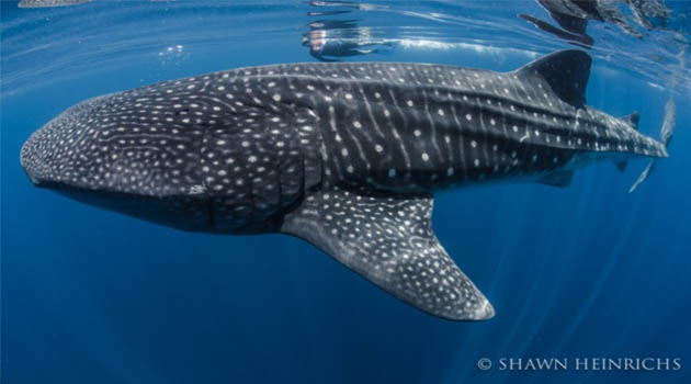 Sustainable Shark Dive Tourism Website Now Live: Best Practices and Trip Reviews