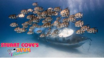 Stuart Cove's Dive Bahamas Creates New Wreck Diving Site