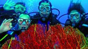 Discover the Wonders of Diving New Caledonia