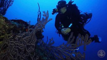 Divetech Offers Expedition to Remote 12-Mile Bank, often called the  4th Cayman Island