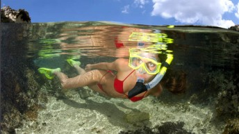 DEMA snorkeling promotion continues; New Free Safety Poster Available