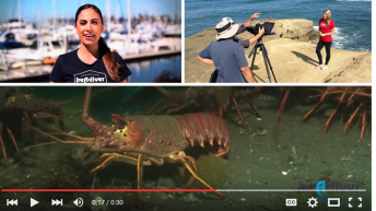 Latest DEMA PSA Highlights Safety for California Spiny Lobster Season