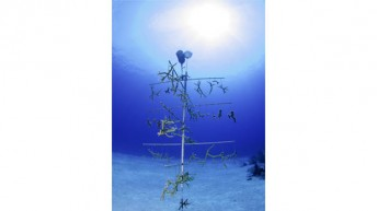 Ocean Frontiers to Establish Coral Nursery for Reef Conservation