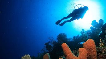 Special Dive Show Alert for Savvy Dive Travel Professionals