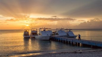 CUBA: It's Official!  Learn More About Diving this Incredible Place