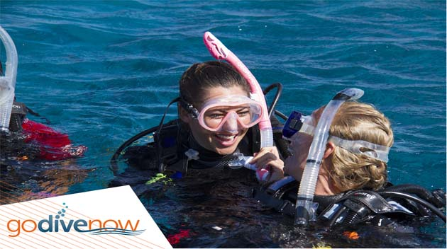 New Promotional Images Just Added to the Go Dive Now Member Toolkit!