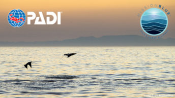 PADI and Mission Blue Announce Partnership to Ignite Support for Hope Spots