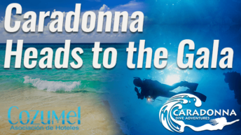 Caradonna Dive Adventures attending their 20th consecutive trip to Cozumel Gala June 6-11th 2017
