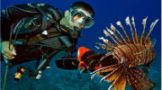Key Largo to Host July 29 Lionfish Derby