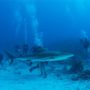 """Expanding Cayman's Dive """"Hit List""""-Dive leaders tout lesser-known sites: more choices for divers,  stress relief for more popular sites"""