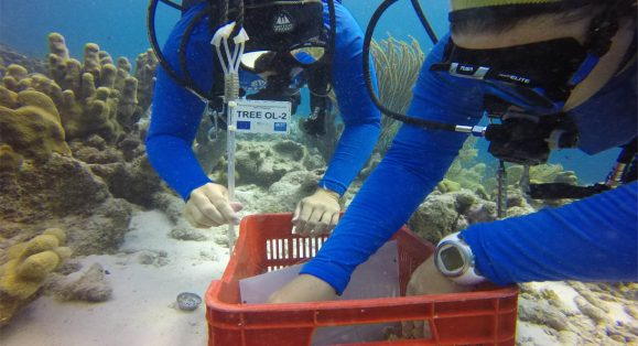 New Pop-Up Coral Nursery Installed on Bonaire's Oil Slick Leap Site